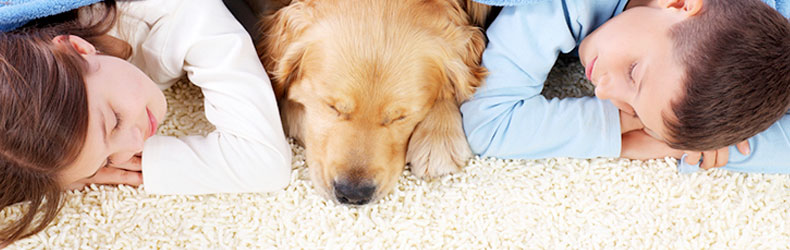 Pet Stains & Odor Removal | BNK Chem-Dry Carpet Cleaning